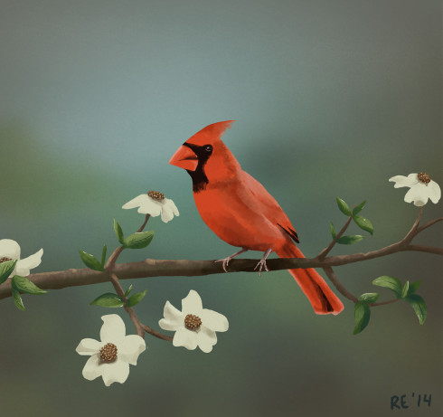 Virginia State Bird Cardinal and State Flower Tree Dogwood by Ruthie Edwards