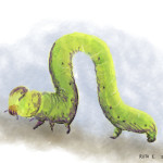 inchworm_ruthie_edwards