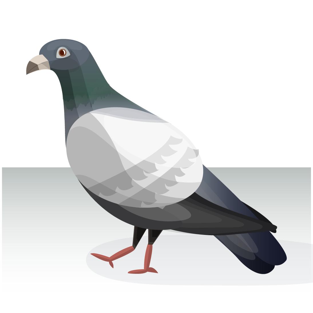 0711_pigeon