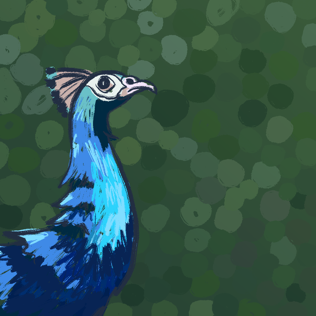 0713_peacock