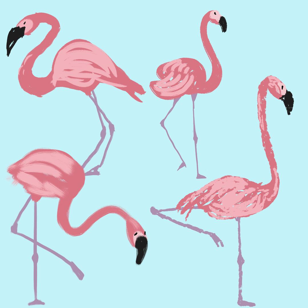 0716_flamingos