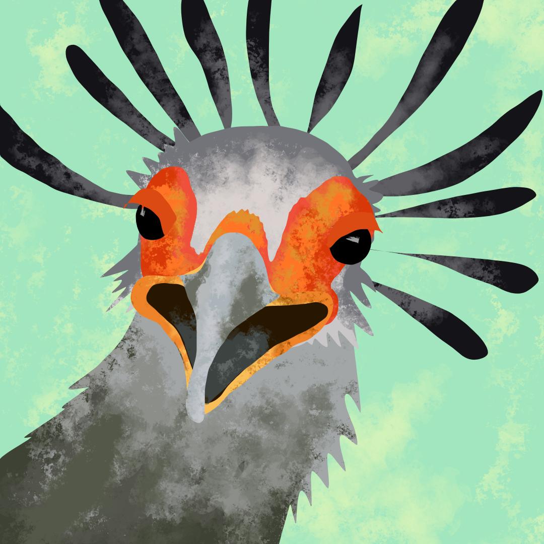 0772_secretarybird